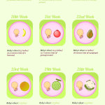 Pregnancy & the Bump Infographic: Week by Week